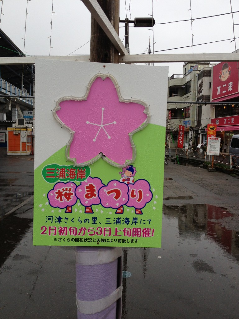 桜祭り看板